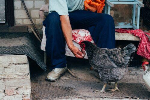 a man feeding a chicken